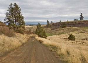 Lincoln County Back Road