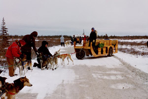 Rubber-tired Dog Sled