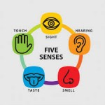 Using All of our Senses