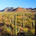 Must-See Snowbird Attractions In Southern Arizona