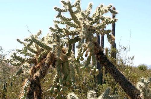 dangerous desert plants