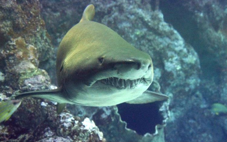sharks in florida