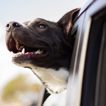 things RVing dogs need