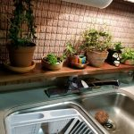 What Houseplants Should You Grow In Your RV?