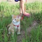 What You Need To Know About RVing With Cats