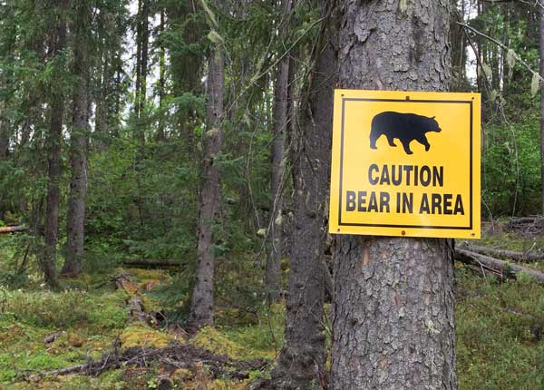 keep bears out of campsites