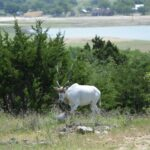 New Wildlife Safari & RV Park Open In Central Texas
