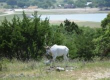 New Wildlife Safari & RV Park Open In Central Texas