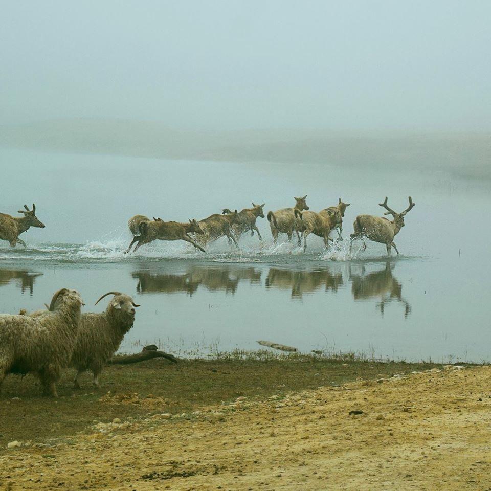 Buena Vista Wildlife Safari