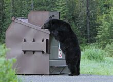 Keep Bears Out of Campsites with this Expert Tip