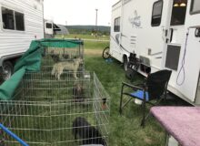 This RVer Travels In A Modified Class C With Her Show Dogs