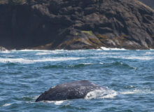 The Best Places To Go Whale Watching On The Oregon Coast