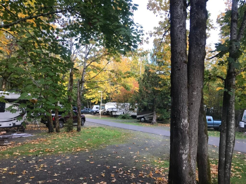 Fall leaves showing color in an RV Park