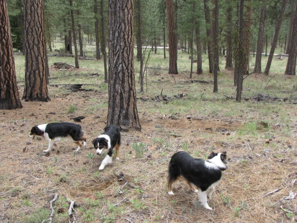 RV travel tip keep pets and kids and other distractions under control