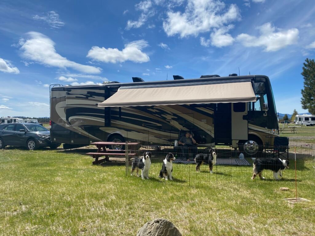 RV set up with 4 dogs