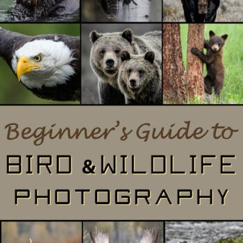 Beginner's Guide to Bird & Wildlife Photography