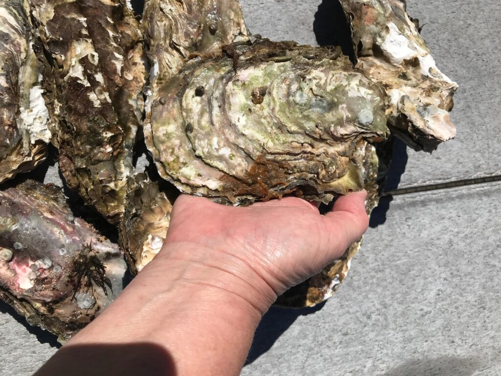 Oysters are an easy meal to prepare and can simplify RV cooking
