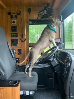 Pet Friendly Luxury RV Rentals