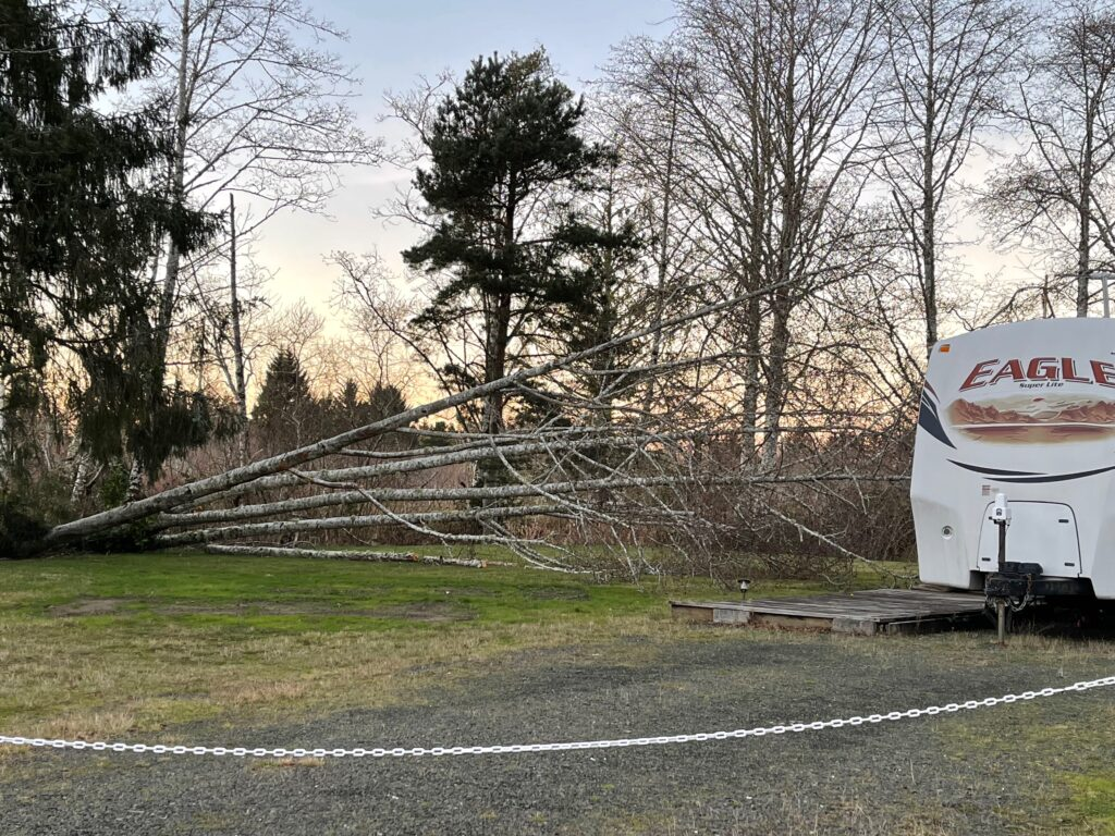 Tree toppled by the wind in an RV park
