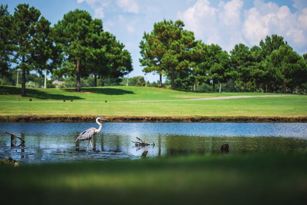 Bay Point Resort Gof Club offers two 18-hole courses; photo Bay Point Resort