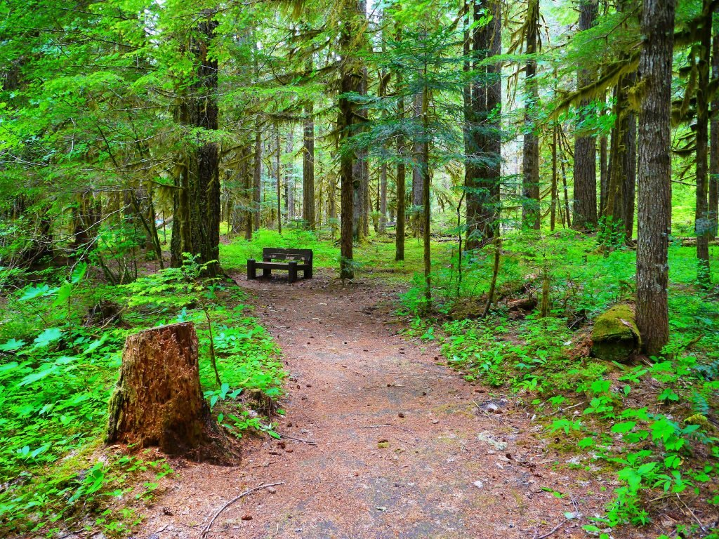 campgrounds near hiking trails