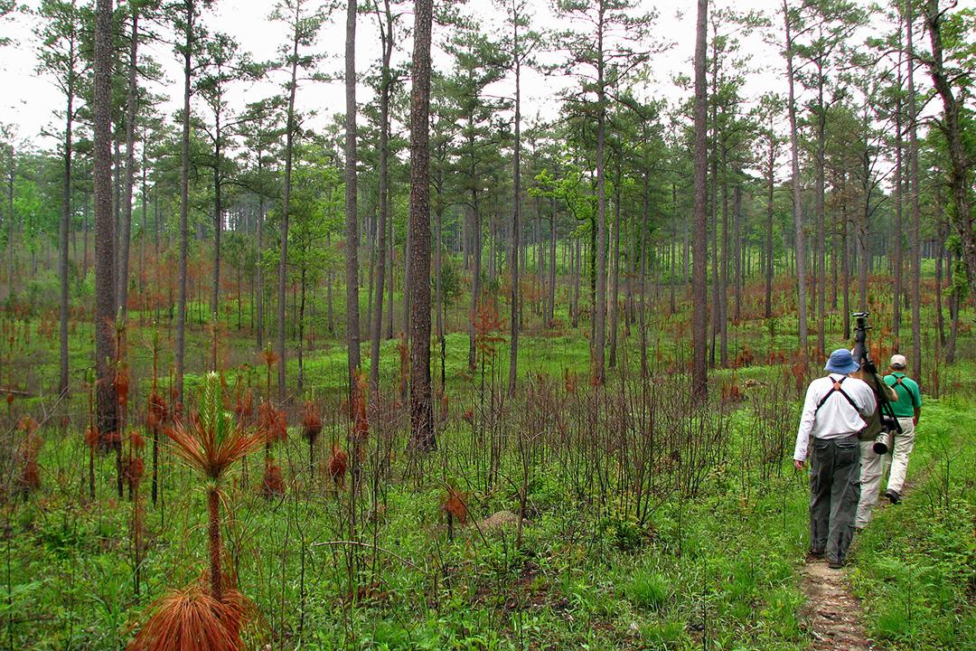 Pinhoti Trail in Alabama