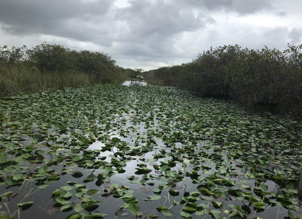 waterway in the Everglades