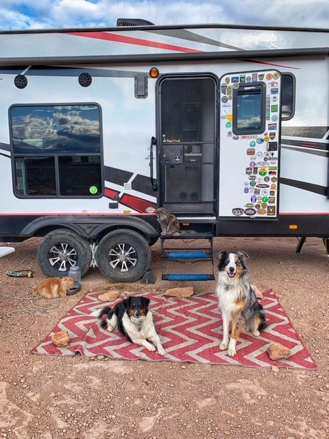 2 dogs and 2 cats in front of travel trailer