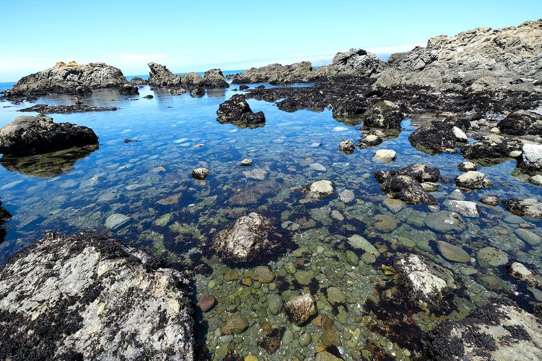 Tide pool at MacKerricher State Park in California