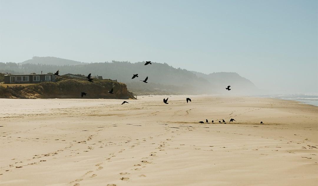 Birds on Tillicum beach in Oregon