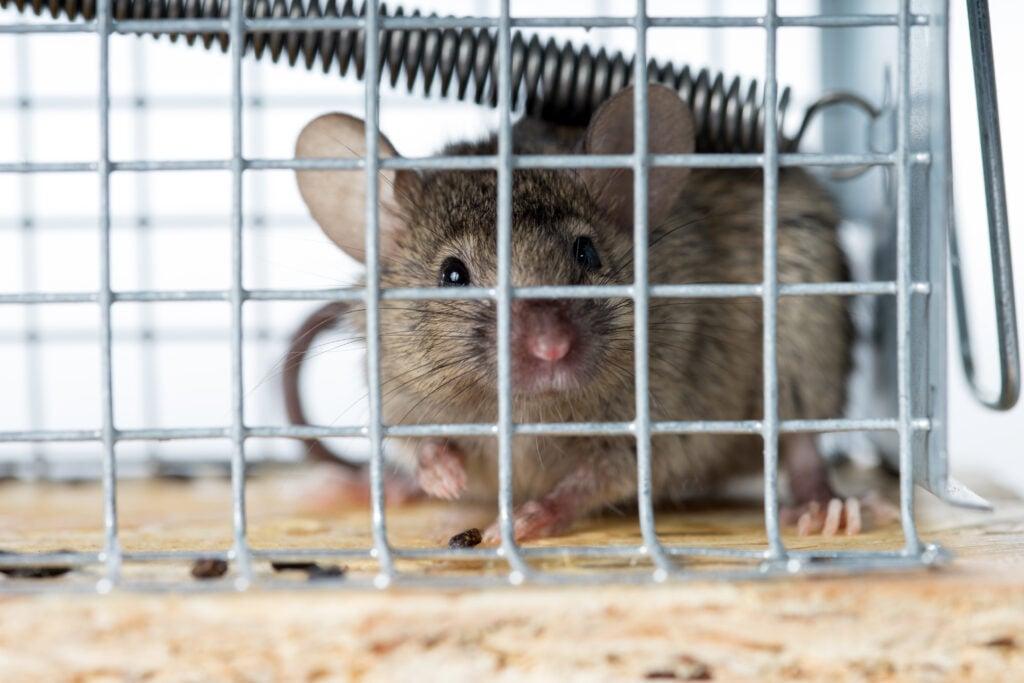 mice in an RV - closeup