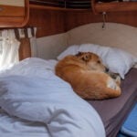 dog laying in RV bed - above RV carpet